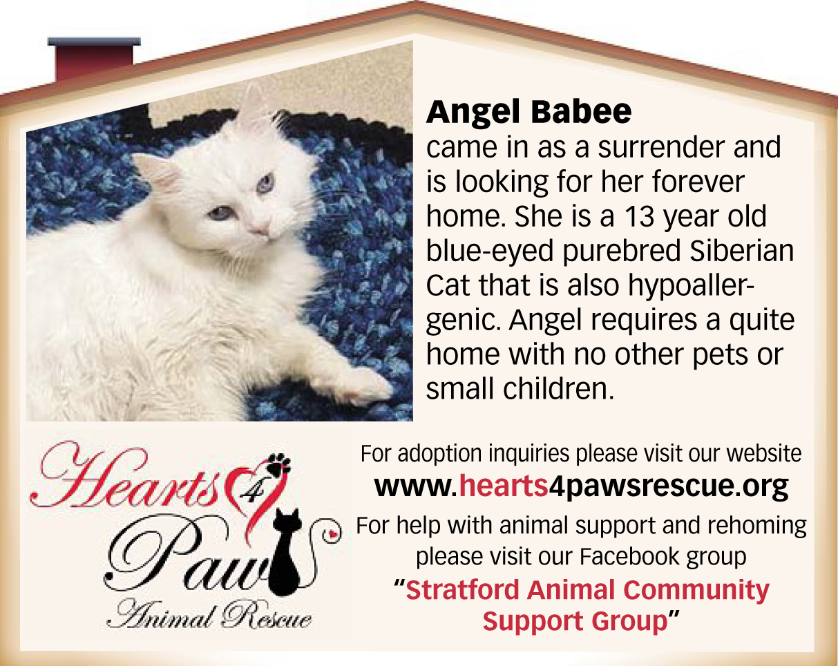 Angel Babee is looking for her forever home